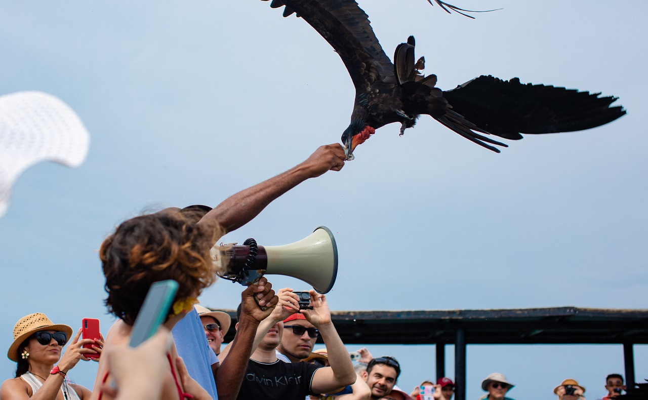 Guía alimentando ave marina volando sobre él en el Oceanario Islas del Rosario