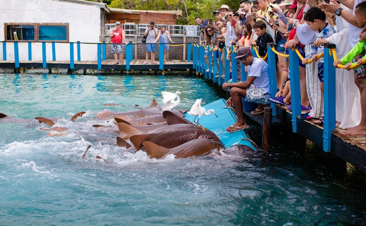 Show de tiburones en el Oceanario Islas del Rosario en Cartagena