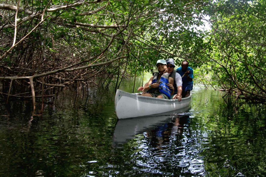 Túnel del Caiman, túnel natural hecho de manglares