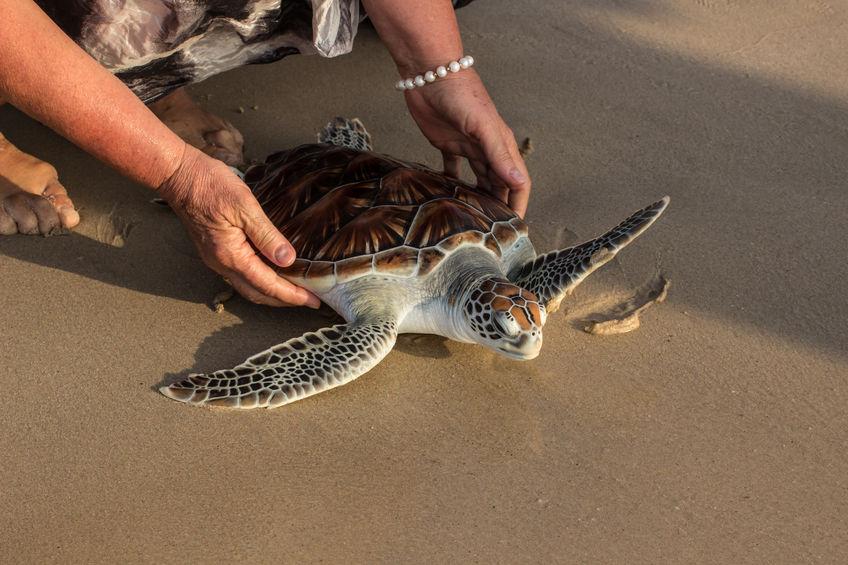 Liberación-de-tortugas-en-Cartagena