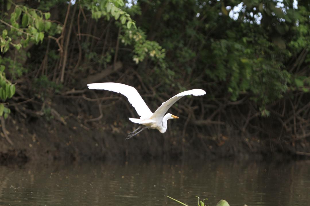 Aves en Cartagena