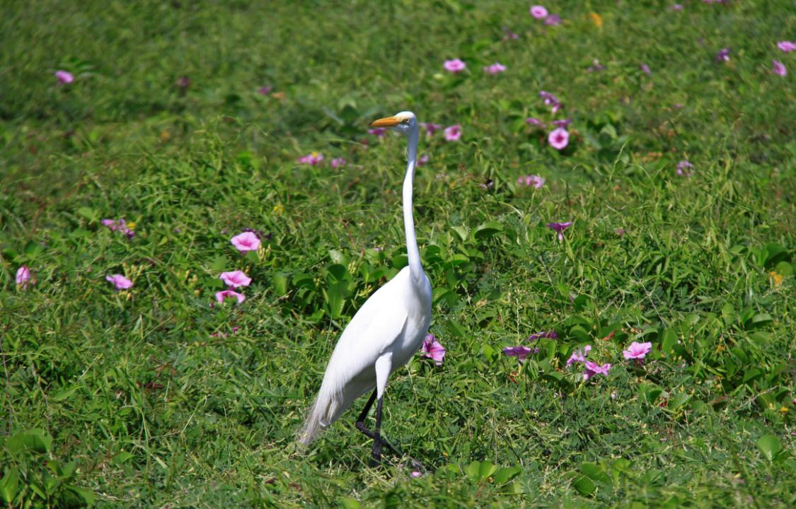 Avistamiento de aves en Cartagena