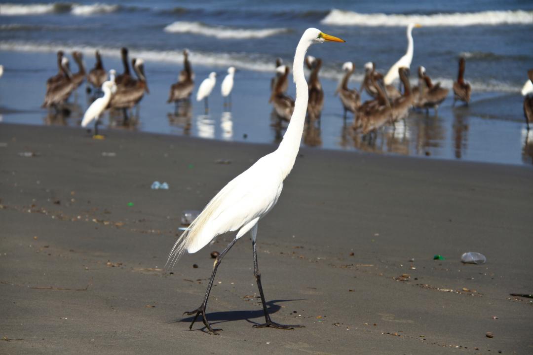 Aves Cartagena