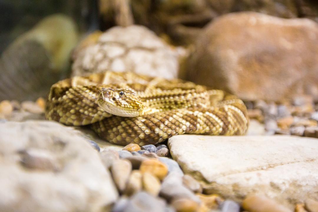 Serpiente-del-Vivarium