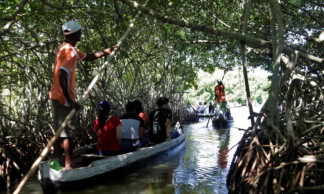 Paseo ecológico a través de los manglares de la Ciénaga de la Virgen en La Boquilla, Cartagena