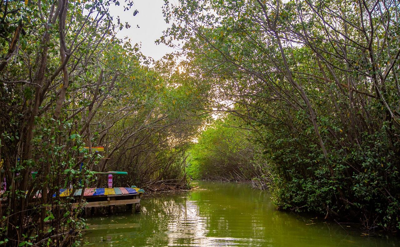 vista del mangle en la isla de las iguanas con Las Chambaculeras en Cartagena de Indias