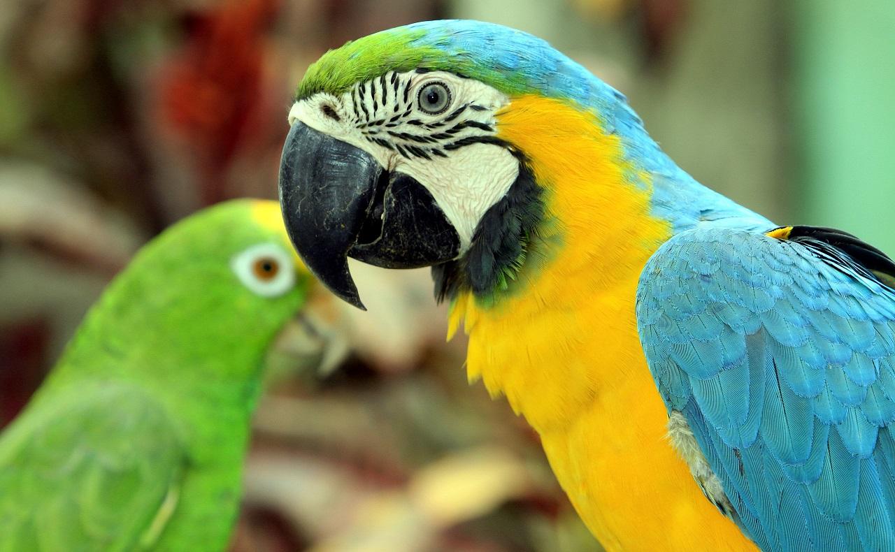 Guacamaya en Aviario Nacional de Cartagena para ilustrar nota de avistamiento de aves