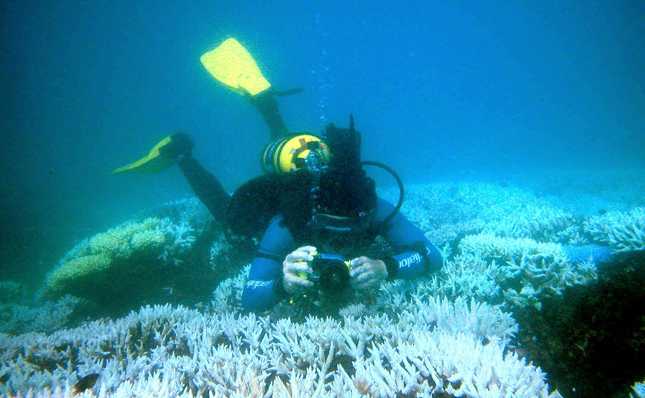Buzo en arrecife de coral australiano, imagen para ilustrar nota sobre deportes acuáticos en Cartagena de Indias