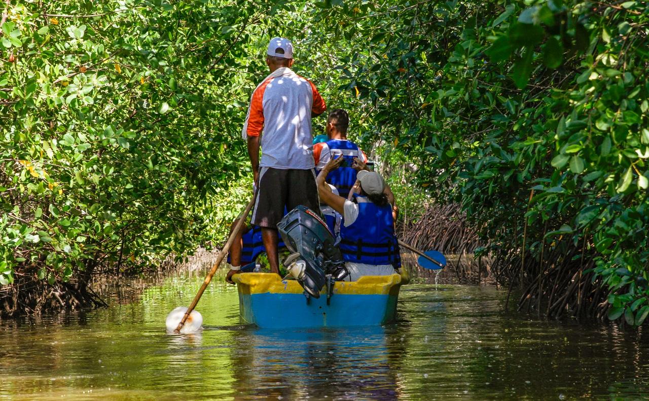 grupo de turistas a bordo de canoa en tunel de manglar en Ararca, Barú, Cartagena
