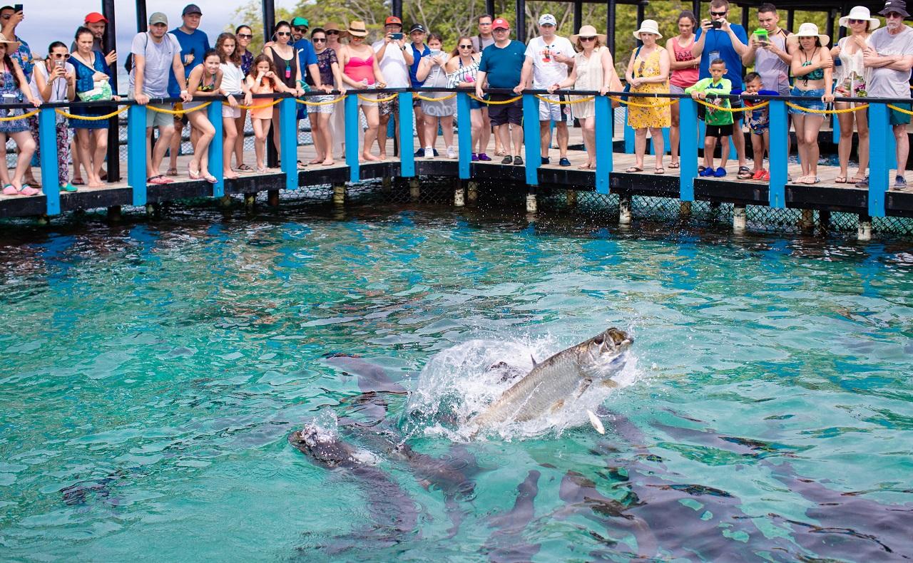 Oceanario de Cartagena de Indias, peces alimentándose